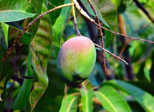 Pyszne mango