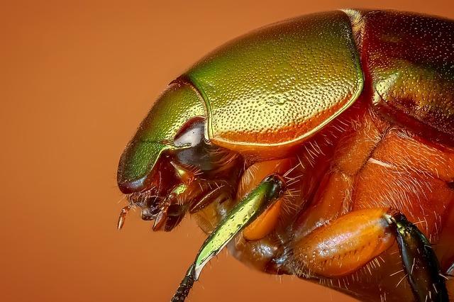 beetle-1142373_640